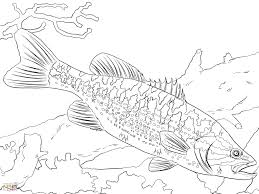 printable coloring pages fish