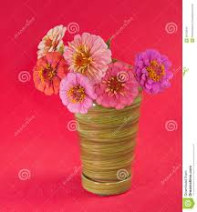 zinnia flowers in different shades of pink stock images image