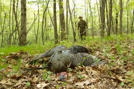 Massachusetts wildlife images Grafton land trust hunting jpg