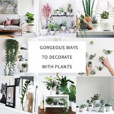 how to decorate pictures how to decorate your interior with green indoor plants and save money