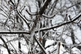 free photo icicles tree outdoor free image on pixabay