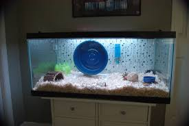 Hamster Cages Cheap Aquarium Pros And Cons For A Hamster Tips How To And Diy