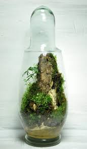 75 best terrarium images on pinterest terrarium ideas