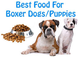 boxer dog york dog lovers know the best dog foods for boxer breed dogs puppies