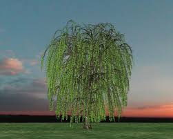 small garden design weeping willow tree weeping willow the