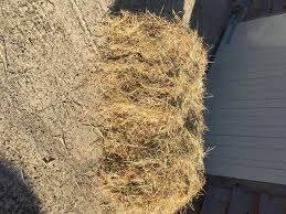 How To Make A Hay Bail Blind Hay Bales Local Classifieds For Sale In The Uk And Ireland