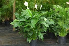 easy to grow plants houseplants kinds of ornamental plants