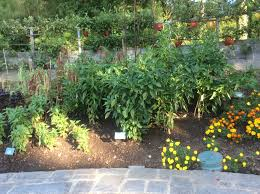 Three Sisters Garden Layout by 7 Benefits Of Companion Planting Southern Exposure Seed Exchange