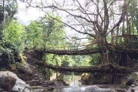 living root bridges u2013 living root bridges of meghalaya a unesco