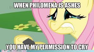 Mlp Fluttershy Meme - the dark fluttershy rises my little brony my little pony