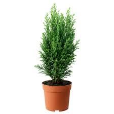 plants and plant pots ikea