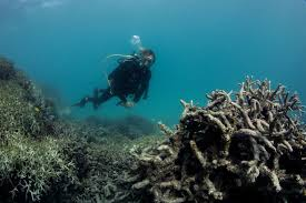 what the great barrier reef looks like in the wake of coral bleaching