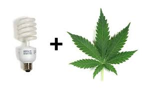 how to grow weed with cfls grow weed easy