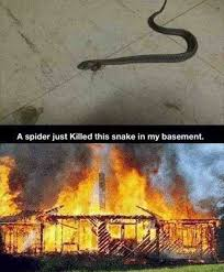 I Saw A Spider Meme - so this spider killed the snake in my basement funny