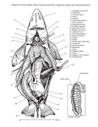 fish external anatomy images learn human anatomy image