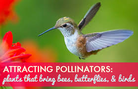 Flowers Bees Pollinate - how to attracting pollinators flowers that encourage bees