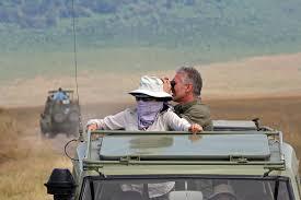 safari safari wikipedia