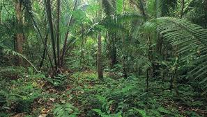 Adaptations Of Tropical Rainforest Plants - the difference between desert plants u0026 rainforest plants sciencing