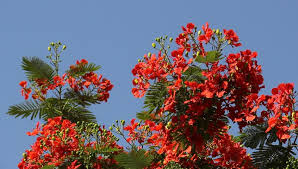 tree branch with many bright flowers sway on against