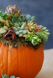 pumpkin decoration diy pumpkin succulent harvest decoration simply happenstance