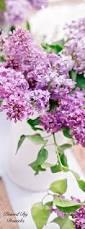 best 25 purple lilac ideas on pinterest lilac flowers purple