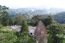 palas view houses for rent in green cow cameron highlands