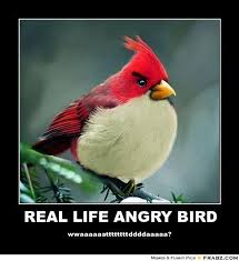 Angry Bird Meme - 30 funny hunger games quotes angry birds memes and funny jokes