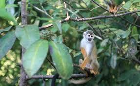 Adaptations Of Tropical Rainforest Plants - exploring ecosystems tropical rainforest diversity california