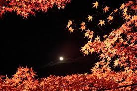 maple tree symbolism kaede the japanese maple tree dengarden