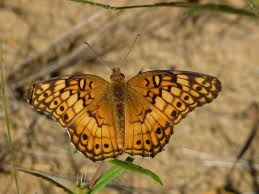 of the east brunswick environmental commission butterfly