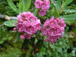 blue mountains native plants plants that may be toxic to mini pigs mini pig info