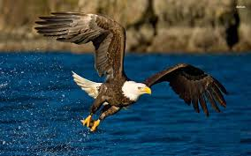 strange eagle wallpapers cute lovely baby pictures collection page 45