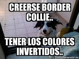 Border Collie Meme - meme personalizado creerse border collie tener los colores