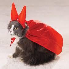 Cat Halloween Costumes Cats 25 Cats Costumes Ideas Cat Costumes Cute
