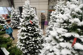 making a choice live or artificial christmas trees or those to