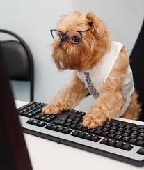Dog With Glasses Meme - bring your dog to work benefits of dogs in the workplace az