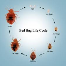 Bed Bug Heat Treatment Cost Estimate by Las Vegas Nv Bed Bug Extermination Pest Canine Inspections