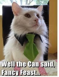 Cute Cats Memes - cute cats memes