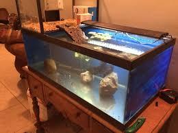 262 best aquariums images on aquarium ideas
