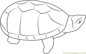 musk turtle coloring free turtle coloring pages