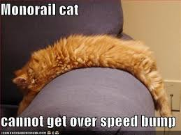 Speed Bump Meme - image 26546 monorail cat know your meme
