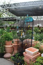 Trellis For Wisteria Vines For Growing In Houston Choosing The Right Vine For Your Garden