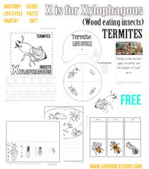 free insect lapbooks