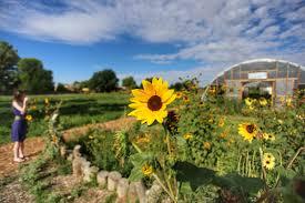 farm and table albuquerque farm and table farmandtable twitter