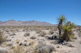 mojave desert native plants first solar u0027s silver state south wrong from the start