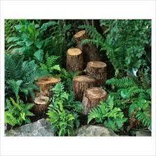 best 25 ferns garden ideas on pinterest ferns grasses and
