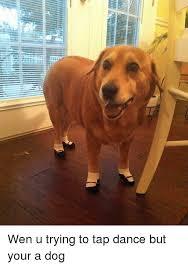Dancing Dog Meme - wen u trying to tap dance but your a dog dancing meme on me me