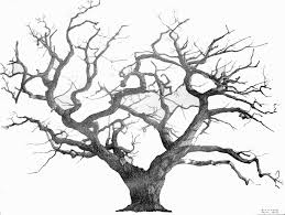 drawing of a tree branching out learn how to draw a realistic tree