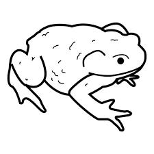 imagenes de un sapo para dibujar faciles animales part 3