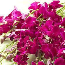 Dendrobium Orchid The 25 Best Dendrobium Orchids Ideas On Pinterest Unusual